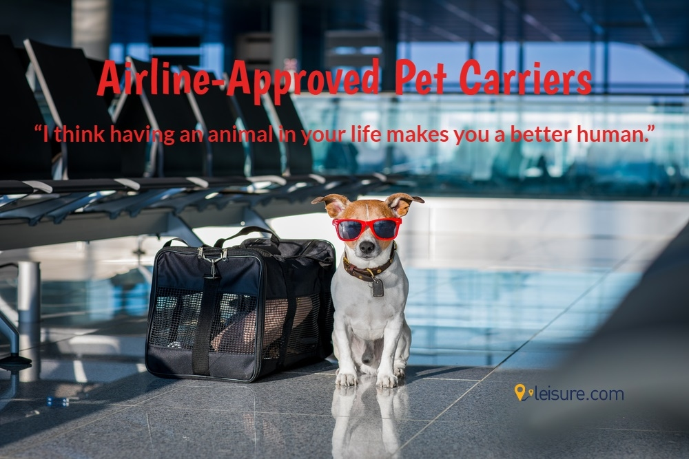 Traveling With Your Pet? Here are Top Airline-Approved Pet Carriers